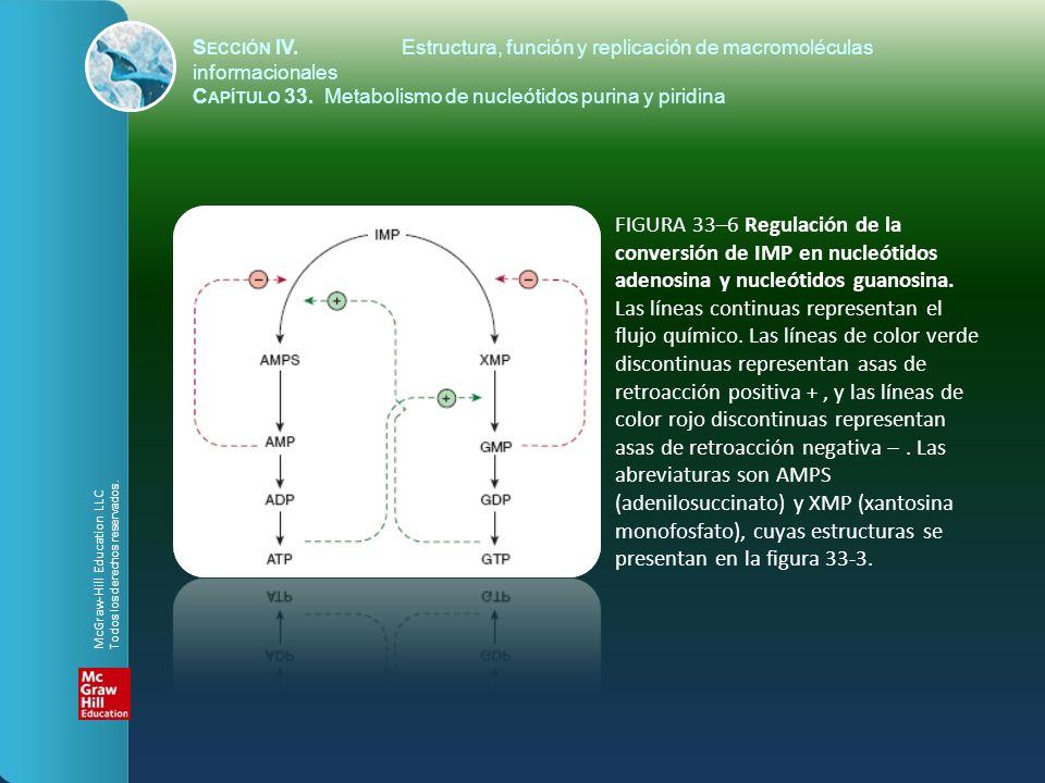 FIGURA 33–6 Regulación de la conversión de IMP en nucleótidos adenosina y nucleótidos guanosina. Las líneas continuas representan el flujo químico. La