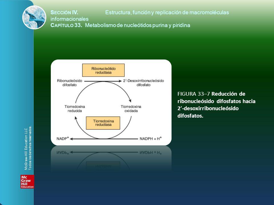 FIGURA 33–7 Reducción de ribonucleósido difosfatos hacia 2-desoxirribonucleósido difosfatos. S ECCIÓN IV.Estructura, función y replicación de macromol