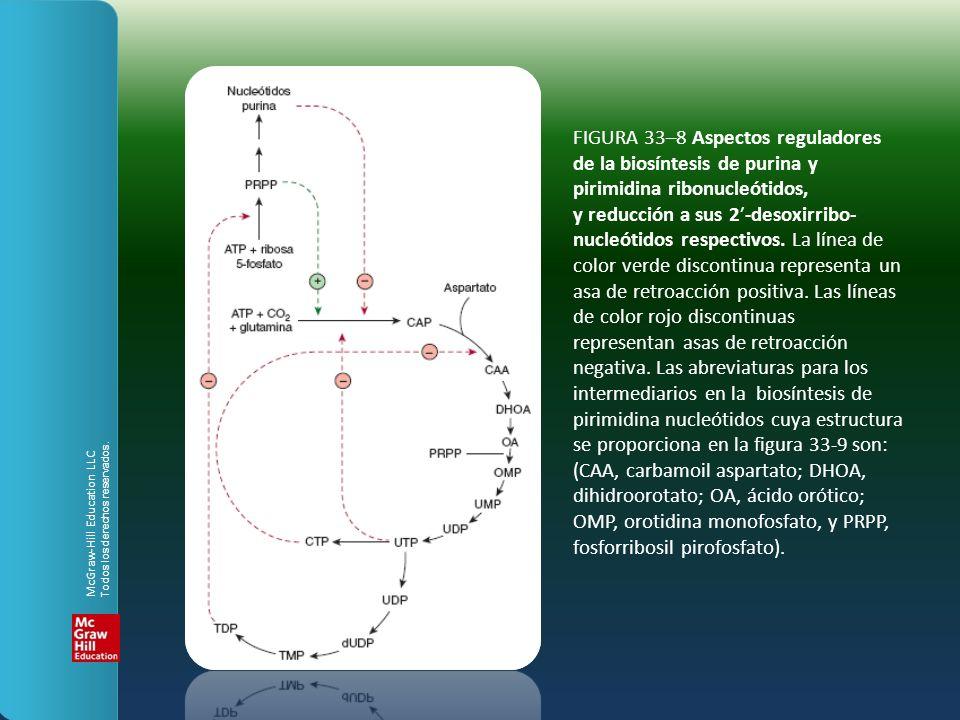 FIGURA 33–8 Aspectos reguladores de la biosíntesis de purina y pirimidina ribonucleótidos, y reducción a sus 2-desoxirribo- nucleótidos respectivos.