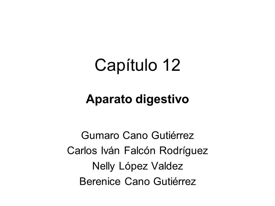 Capítulo 12 Aparato digestivo Gumaro Cano Gutiérrez Carlos Iván Falcón Rodríguez Nelly López Valdez Berenice Cano Gutiérrez