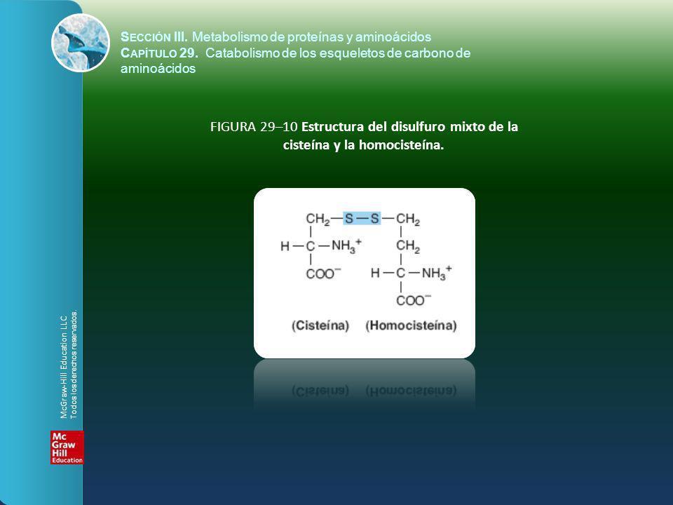 FIGURA 29–10 Estructura del disulfuro mixto de la cisteína y la homocisteína. S ECCIÓN III. Metabolismo de proteínas y aminoácidos C APÍTULO 29. Catab