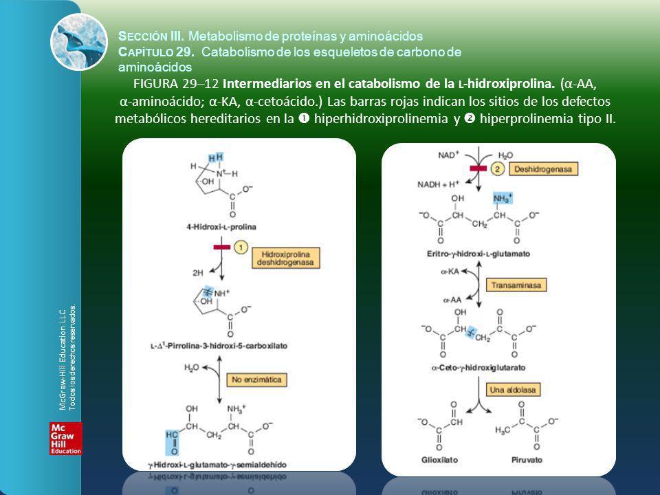 FIGURA 29–12 Intermediarios en el catabolismo de la L -hidroxiprolina. (α-AA, α-aminoácido; α-KA, α-cetoácido.) Las barras rojas indican los sitios de