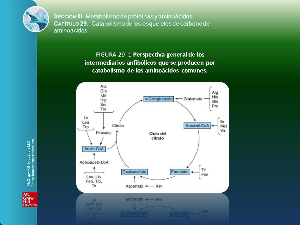 FIGURA 29–2 Catabolismo a intermediarios anfibólicos de la L -asparagina (arriba) y la L -glutamina (abajo).