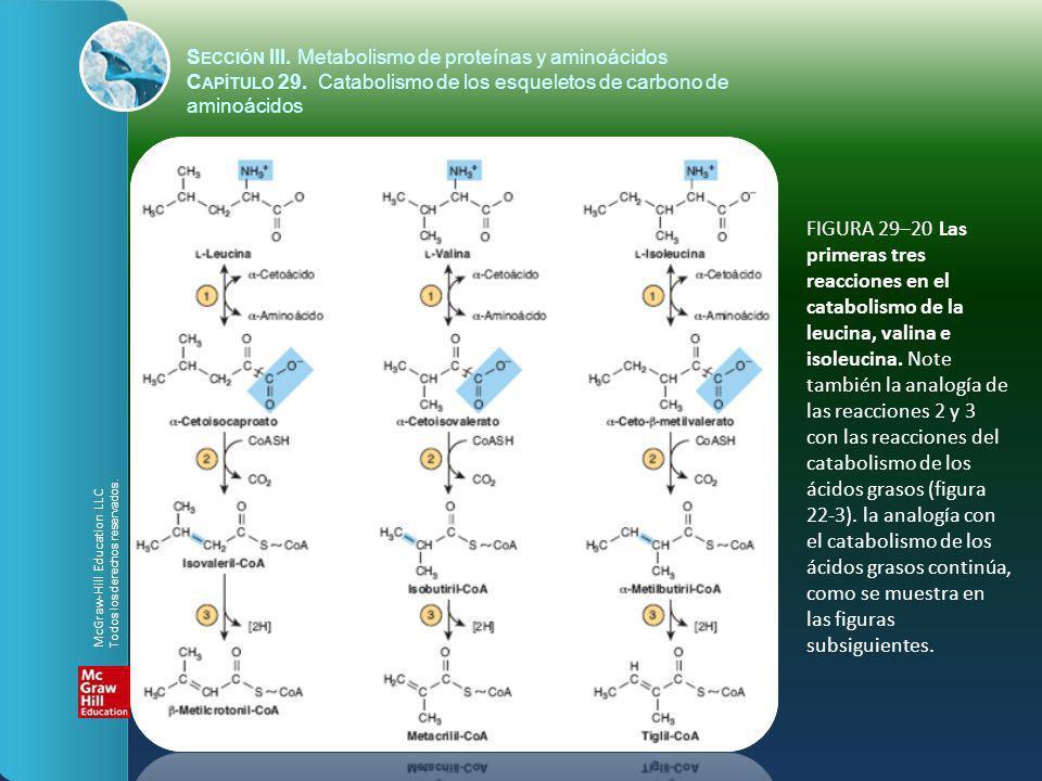 FIGURA 29–20 Las primeras tres reacciones en el catabolismo de la leucina, valina e isoleucina. Note también la analogía de las reacciones 2 y 3 con l