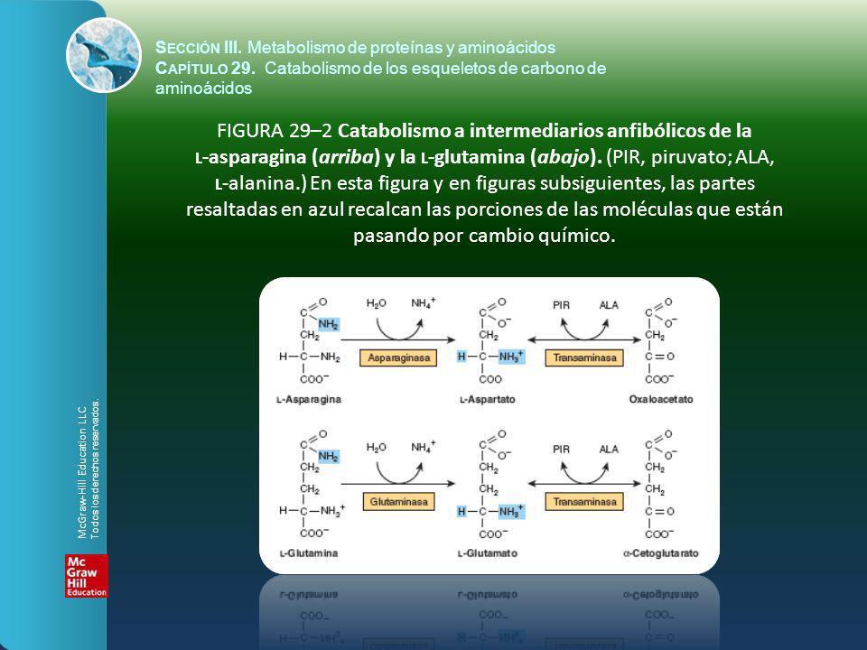 FIGURA 29–2 Catabolismo a intermediarios anfibólicos de la L -asparagina (arriba) y la L -glutamina (abajo). (PIR, piruvato; ALA, L -alanina.) En esta