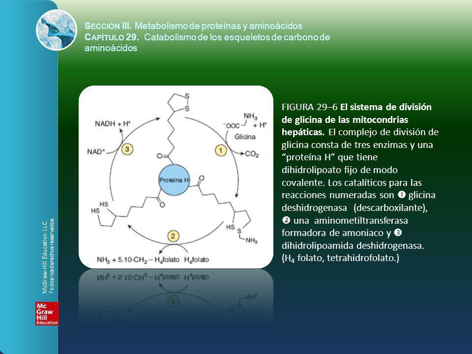 FIGURA 29–6 El sistema de división de glicina de las mitocondrias hepáticas. El complejo de división de glicina consta de tres enzimas y una proteína