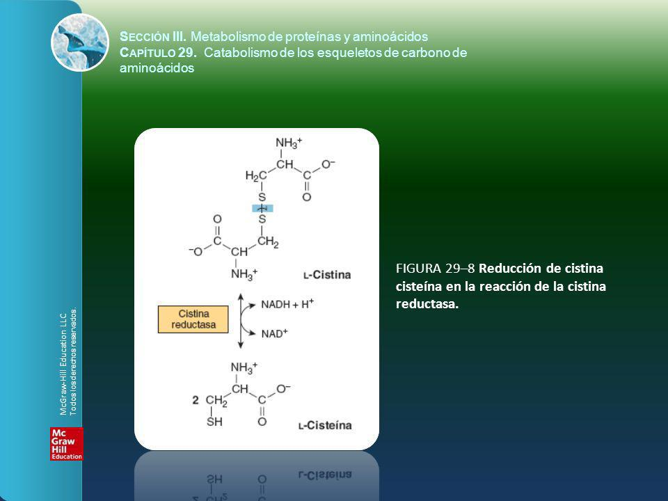 FIGURA 29–8 Reducción de cistina cisteína en la reacción de la cistina reductasa. S ECCIÓN III. Metabolismo de proteínas y aminoácidos C APÍTULO 29. C