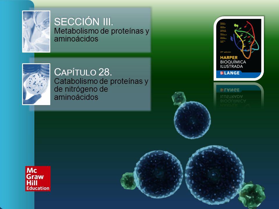 SECCIÓN III. Metabolismo de proteínas y aminoácidos C APÍTULO 28. Catabolismo de proteínas y de nitrógeno de aminoácidos