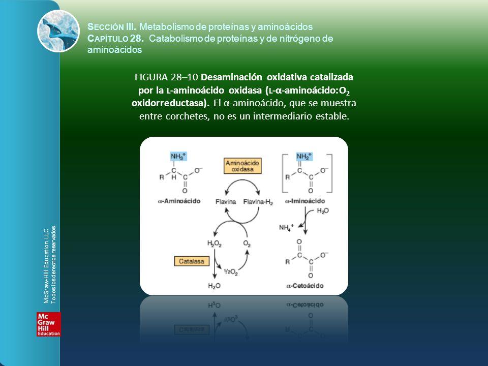 FIGURA 28–10 Desaminación oxidativa catalizada por la L -aminoácido oxidasa ( L -α-aminoácido:O 2 oxidorreductasa). El α-aminoácido, que se muestra en