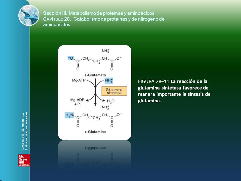 FIGURA 28–11 La reacción de la glutamina sintetasa favorece de manera importante la síntesis de glutamina. S ECCIÓN III. Metabolismo de proteínas y am