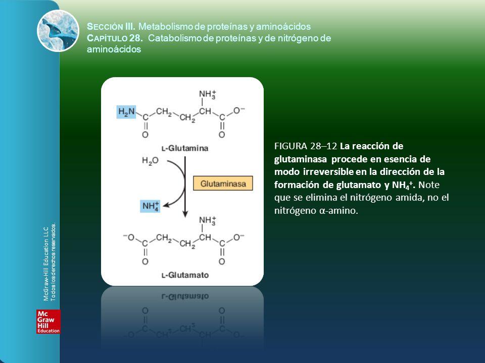 FIGURA 28–12 La reacción de glutaminasa procede en esencia de modo irreversible en la dirección de la formación de glutamato y NH 4 +. Note que se eli