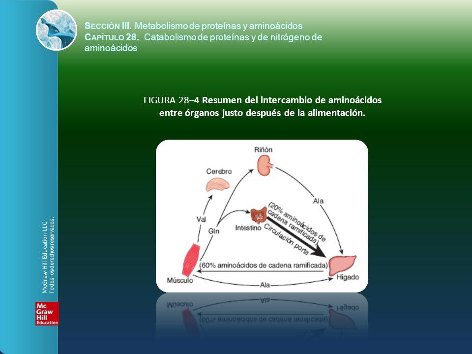 FIGURA 28–4 Resumen del intercambio de aminoácidos entre órganos justo después de la alimentación. S ECCIÓN III. Metabolismo de proteínas y aminoácido