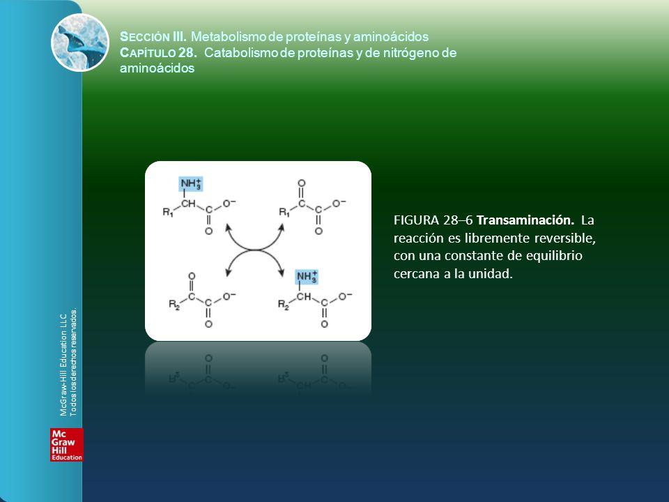 FIGURA 28–6 Transaminación. La reacción es libremente reversible, con una constante de equilibrio cercana a la unidad. S ECCIÓN III. Metabolismo de pr
