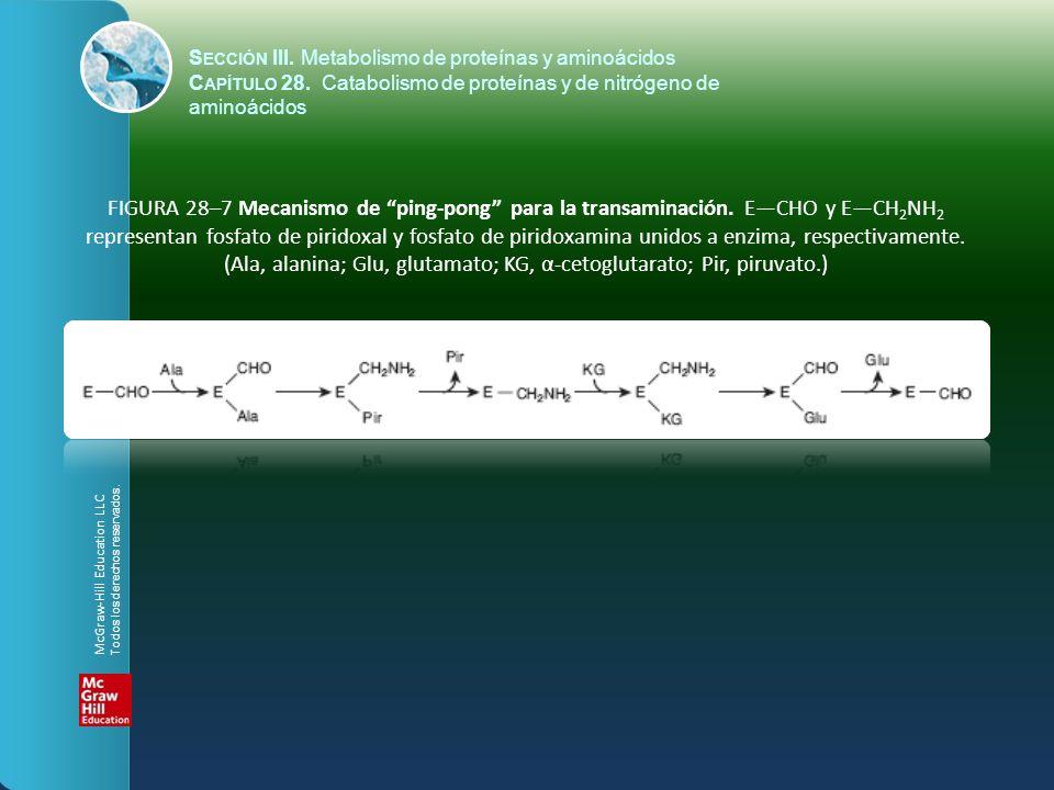 FIGURA 28–7 Mecanismo de ping-pong para la transaminación. ECHO y ECH 2 NH 2 representan fosfato de piridoxal y fosfato de piridoxamina unidos a enzim