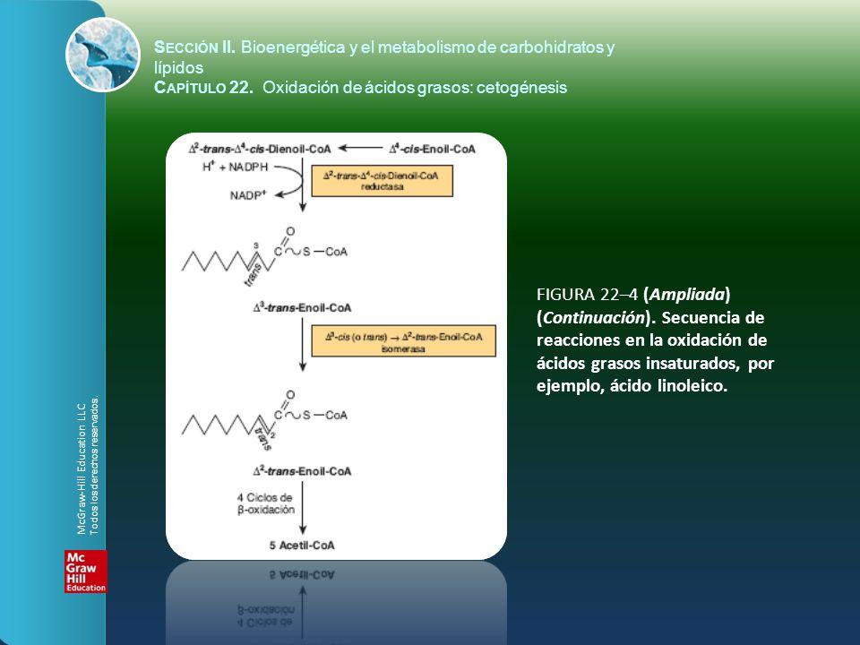 FIGURA 22–4 (Ampliada) (Continuación). Secuencia de reacciones en la oxidación de ácidos grasos insaturados, por ejemplo, ácido linoleico. S ECCIÓN II