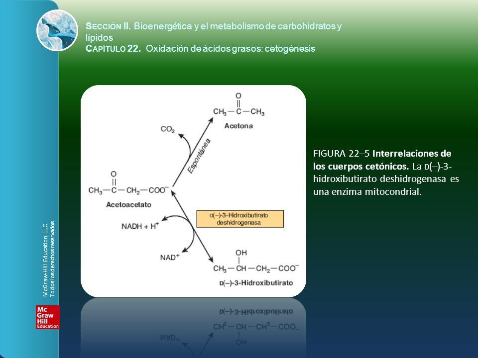 FIGURA 22–5 Interrelaciones de los cuerpos cetónicos. La D (–)-3- hidroxibutirato deshidrogenasa es una enzima mitocondrial. S ECCIÓN II. Bioenergétic