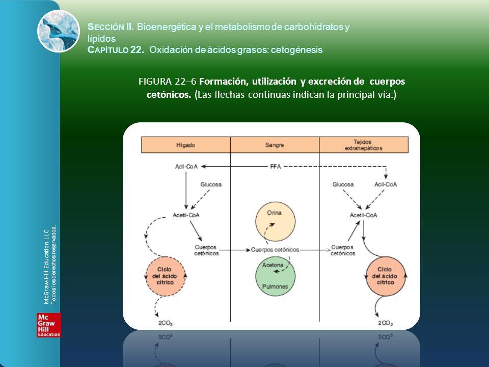 FIGURA 22–6 Formación, utilización y excreción de cuerpos cetónicos. (Las flechas continuas indican la principal vía.) S ECCIÓN II. Bioenergética y el