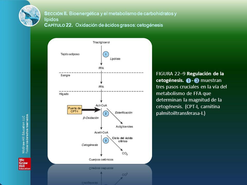 FIGURA 22–9 Regulación de la cetogénesis. - muestran tres pasos cruciales en la vía del metabolismo de FFA que determinan la magnitud de la cetogénesi