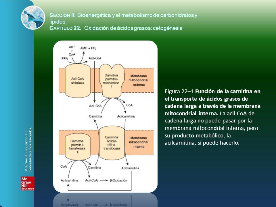 S ECCIÓN II. Bioenergética y el metabolismo de carbohidratos y lípidos C APÍTULO 22. Oxidación de ácidos grasos: cetogénesis Figura 22–1 Función de la