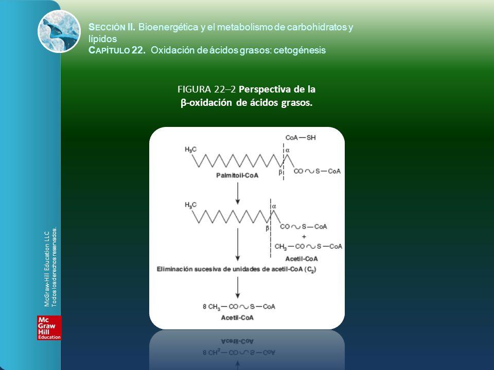 FIGURA 22–2 Perspectiva de la β-oxidación de ácidos grasos. S ECCIÓN II. Bioenergética y el metabolismo de carbohidratos y lípidos C APÍTULO 22. Oxida