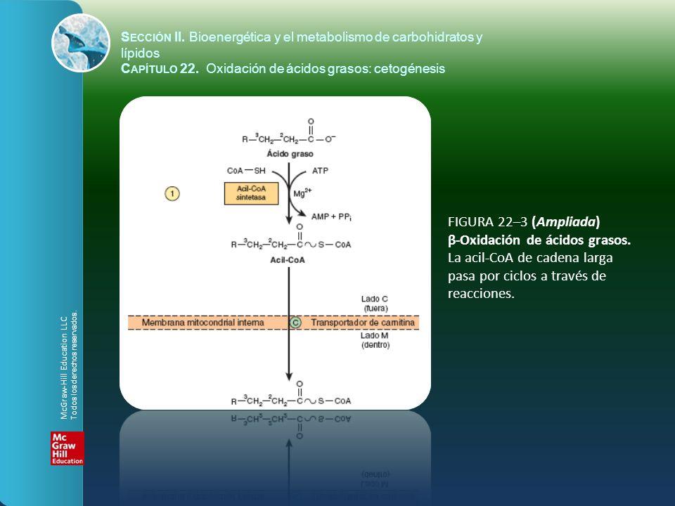 FIGURA 22–3 (Ampliada) β-Oxidación de ácidos grasos. La acil-CoA de cadena larga pasa por ciclos a través de reacciones. S ECCIÓN II. Bioenergética y
