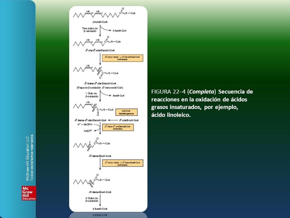 FIGURA 22–4 (Completa) Secuencia de reacciones en la oxidación de ácidos grasos insaturados, por ejemplo, ácido linoleico. McGraw-Hill Education LLC T