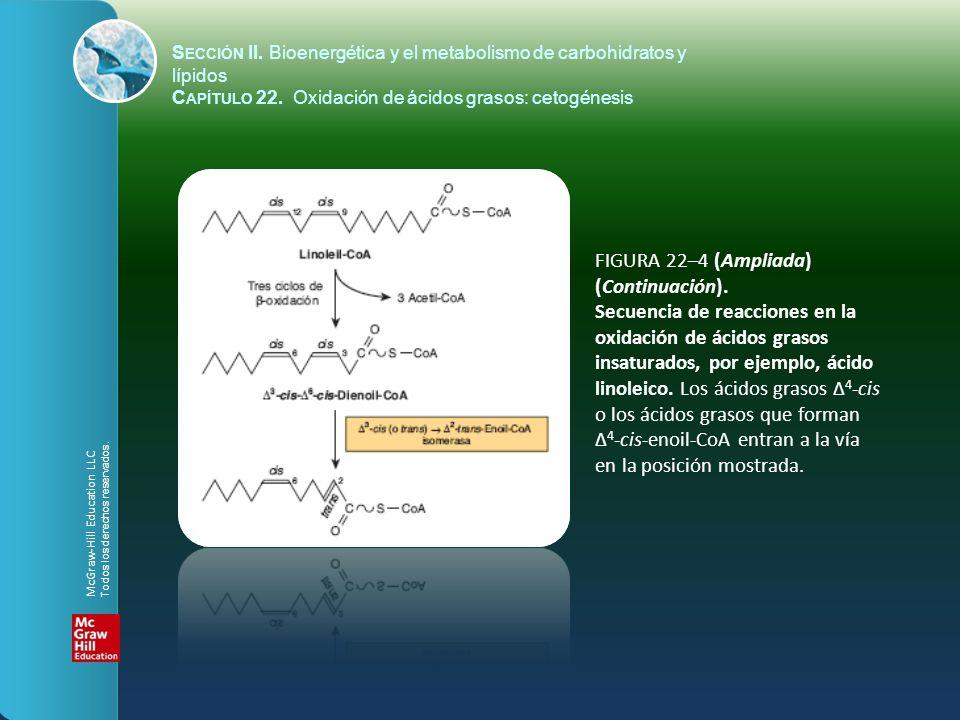 FIGURA 22–4 (Ampliada) (Continuación). Secuencia de reacciones en la oxidación de ácidos grasos insaturados, por ejemplo, ácido linoleico. Los ácidos
