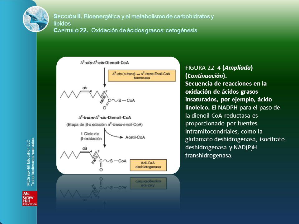FIGURA 22–4 (Ampliada) (Continuación). Secuencia de reacciones en la oxidación de ácidos grasos insaturados, por ejemplo, ácido linoleico. El NADPH pa