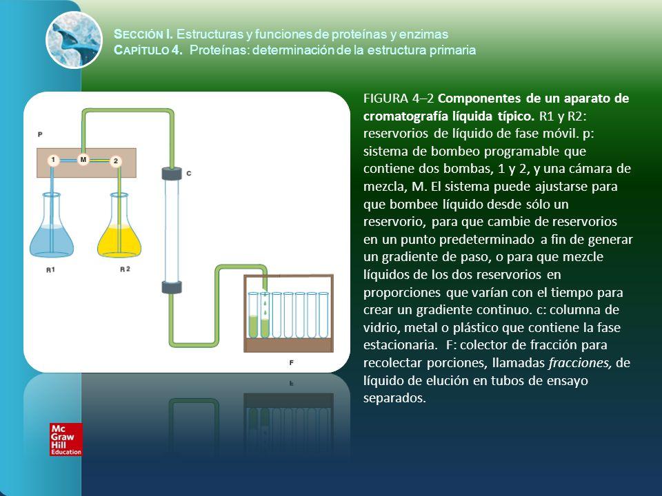 S ECCIÓN I. Estructuras y funciones de proteínas y enzimas C APÍTULO 4. Proteínas: determinación de la estructura primaria FIGURA 4–2 Componentes de u