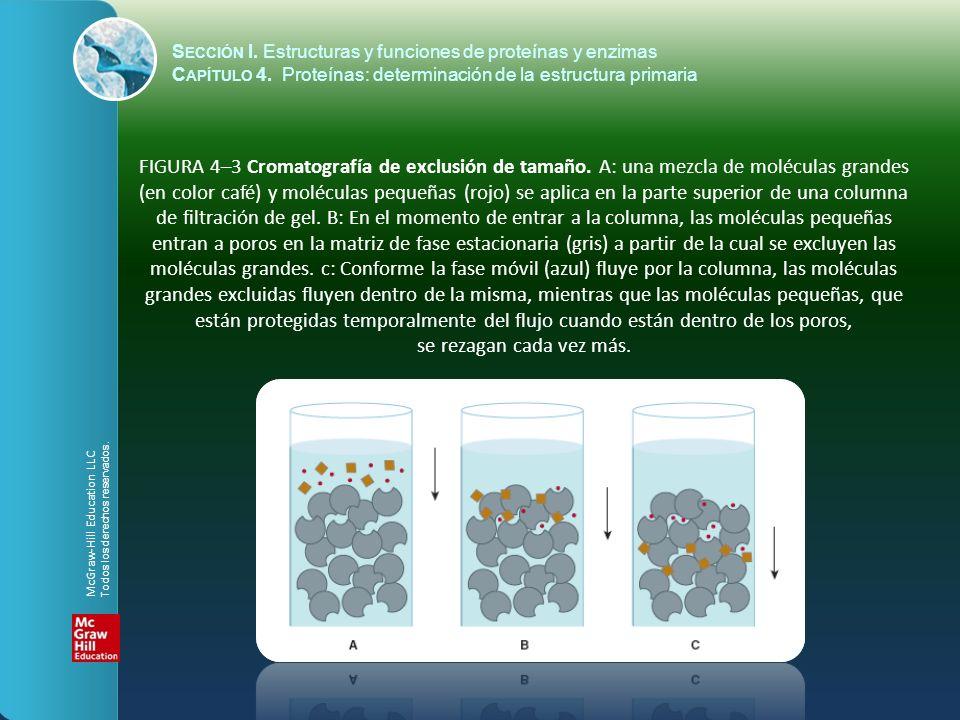 S ECCIÓN I. Estructuras y funciones de proteínas y enzimas C APÍTULO 4. Proteínas: determinación de la estructura primaria FIGURA 4–3 Cromatografía de