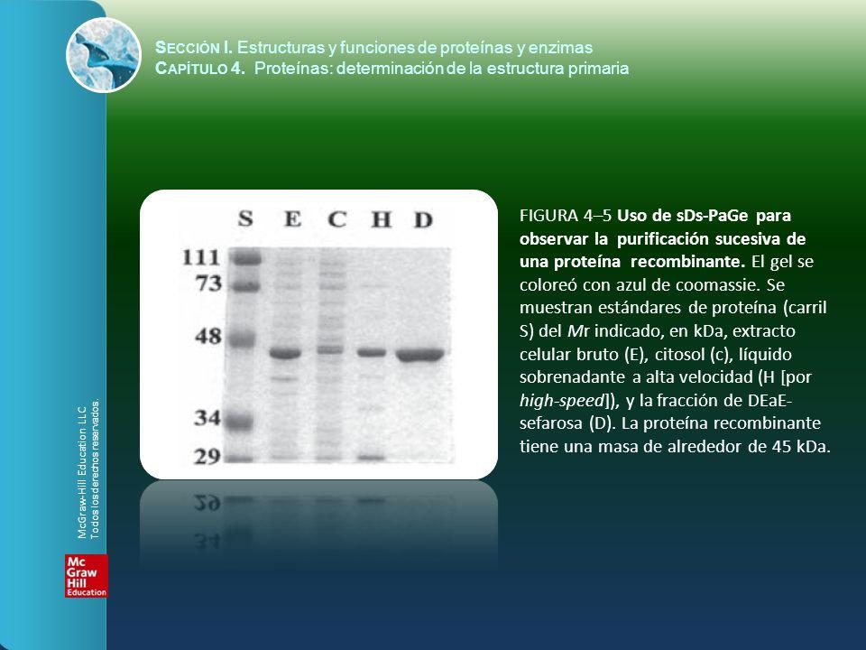 S ECCIÓN I. Estructuras y funciones de proteínas y enzimas C APÍTULO 4. Proteínas: determinación de la estructura primaria FIGURA 4–5 Uso de sDs-PaGe