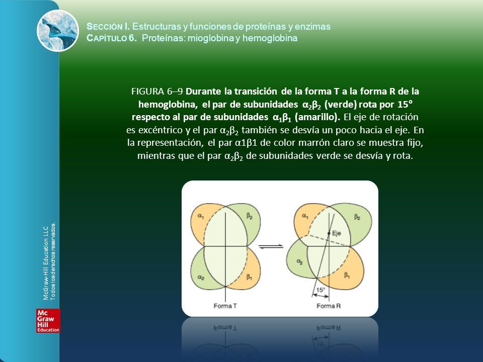 FIGURA 6–9 Durante la transición de la forma T a la forma R de la hemoglobina, el par de subunidades α 2 β 2 (verde) rota por 15° respecto al par de s