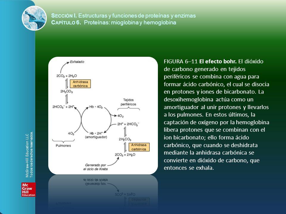 FIGURA 6–11 El efecto bohr. El dióxido de carbono generado en tejidos periféricos se combina con agua para formar ácido carbónico, el cual se disocia