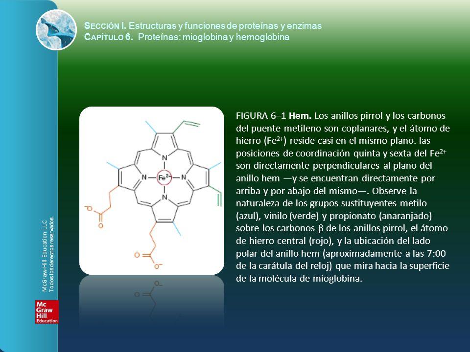 FIGURA 6–1 Hem. Los anillos pirrol y los carbonos del puente metileno son coplanares, y el átomo de hierro (Fe 2+ ) reside casi en el mismo plano. las