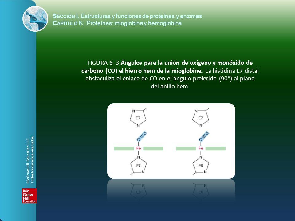 FIGURA 6–3 Ángulos para la unión de oxígeno y monóxido de carbono (CO) al hierro hem de la mioglobina. La histidina E7 distal obstaculiza el enlace de