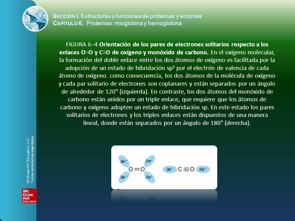 FIGURA 6–4 Orientación de los pares de electrones solitarios respecto a los enlaces O=O y CO de oxígeno y monóxido de carbono. En el oxígeno molecular