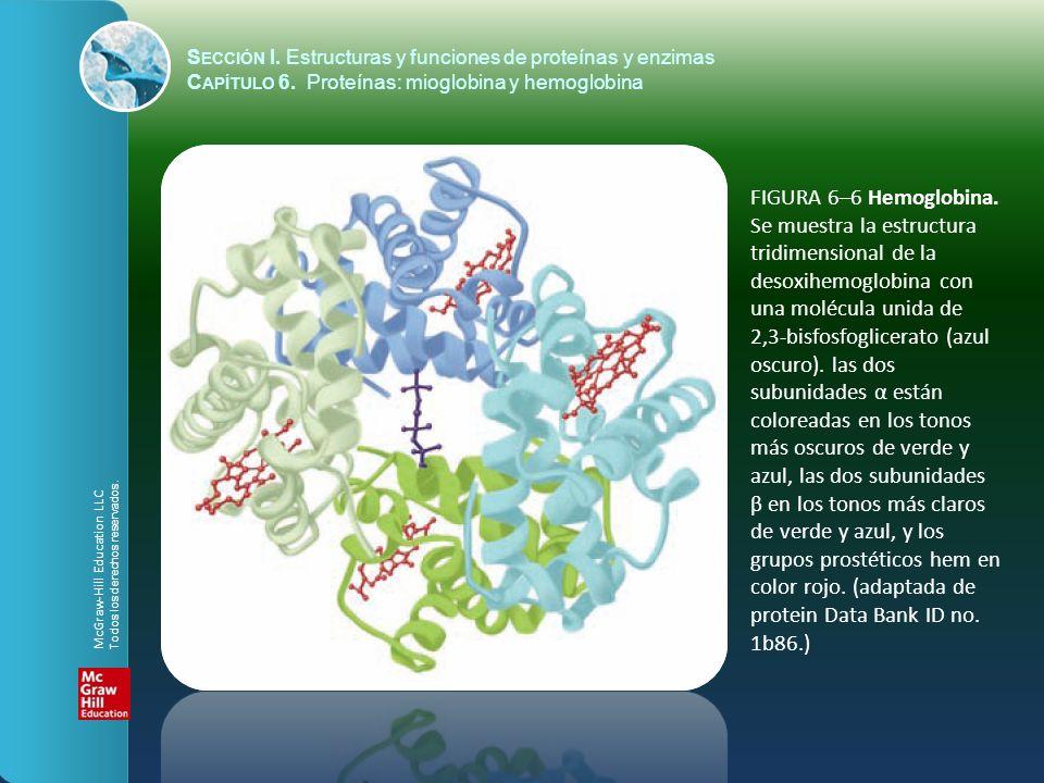 FIGURA 6–6 Hemoglobina. Se muestra la estructura tridimensional de la desoxihemoglobina con una molécula unida de 2,3-bisfosfoglicerato (azul oscuro).