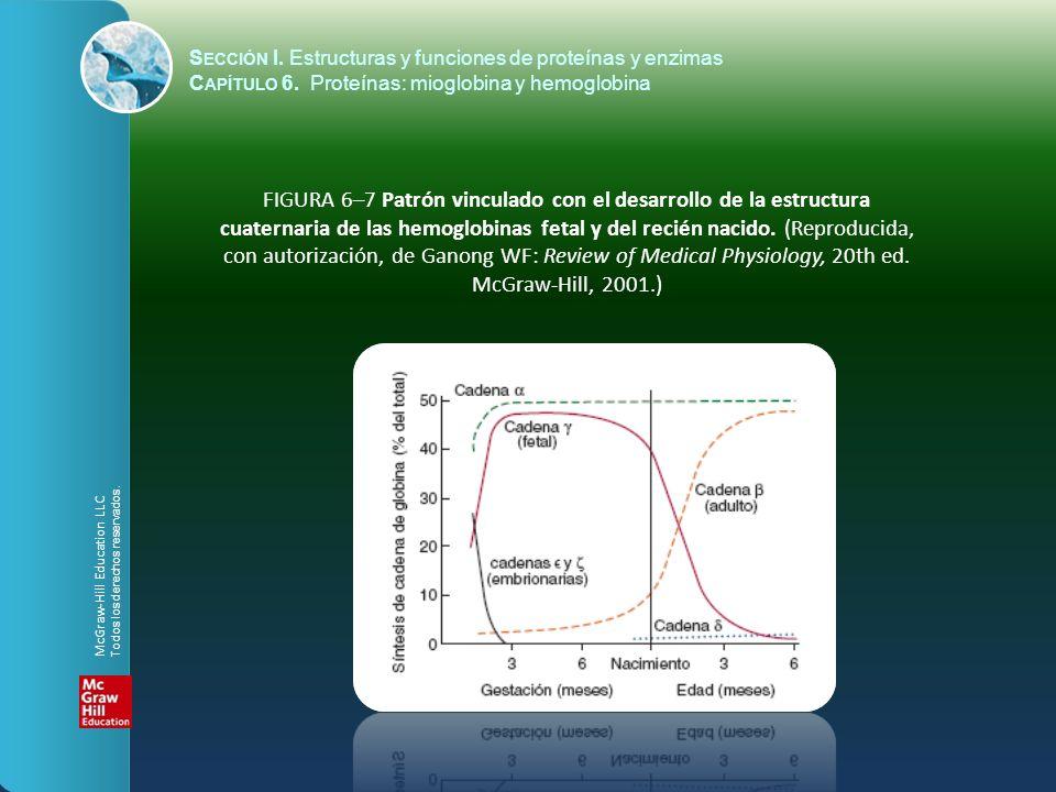 FIGURA 6–7 Patrón vinculado con el desarrollo de la estructura cuaternaria de las hemoglobinas fetal y del recién nacido. (Reproducida, con autorizaci