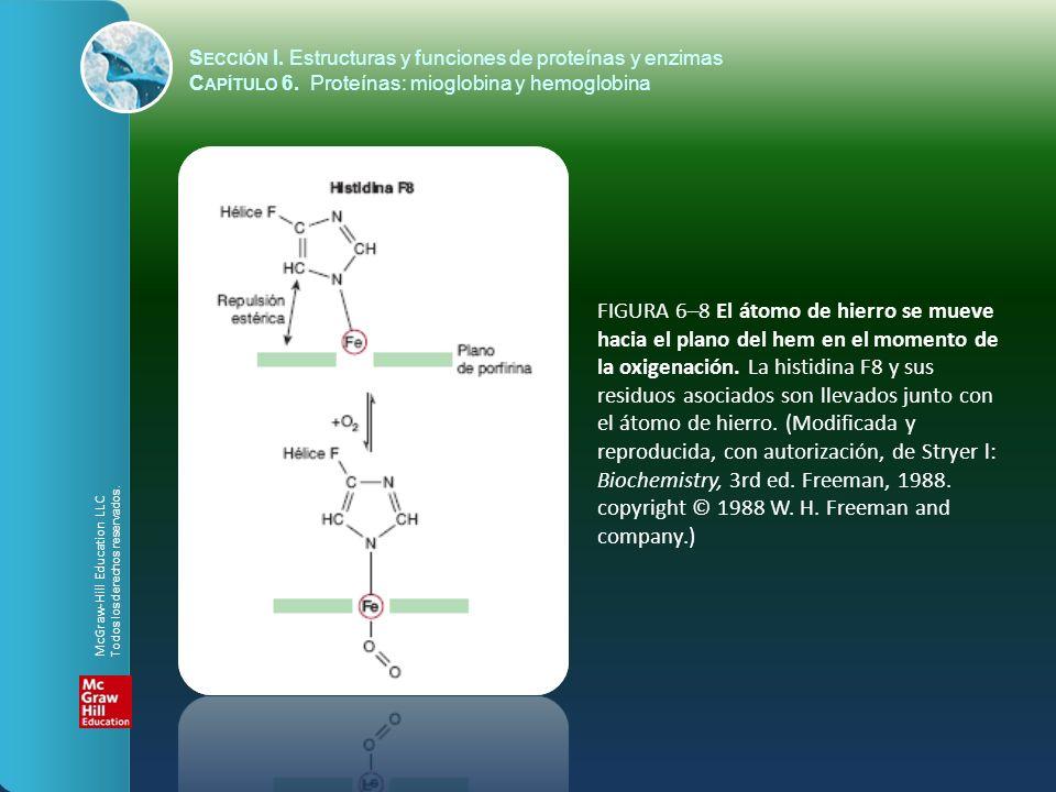 FIGURA 6–8 El átomo de hierro se mueve hacia el plano del hem en el momento de la oxigenación. La histidina F8 y sus residuos asociados son llevados j