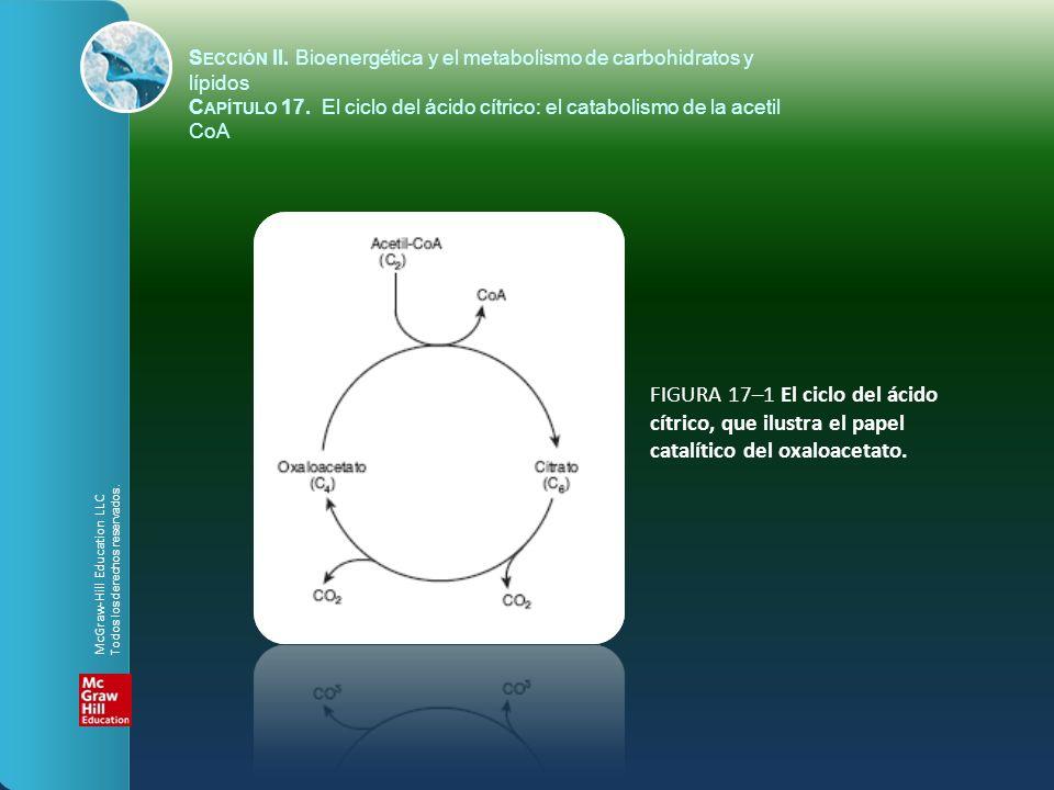 FIGURA 17–2 El ciclo del ácido cítrico: la principal vía catabólica para la acetil-CoA en organismos aeróbicos.