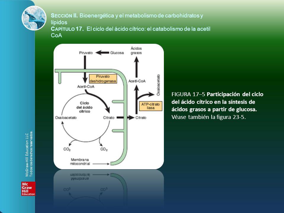 FIGURA 17–5 Participación del ciclo del ácido cítrico en la síntesis de ácidos grasos a partir de glucosa. Véase también la figura 23-5. S ECCIÓN II.