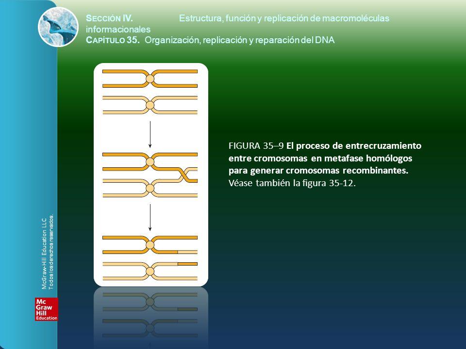 FIGURA 35–9 El proceso de entrecruzamiento entre cromosomas en metafase homólogos para generar cromosomas recombinantes. Véase también la figura 35-12