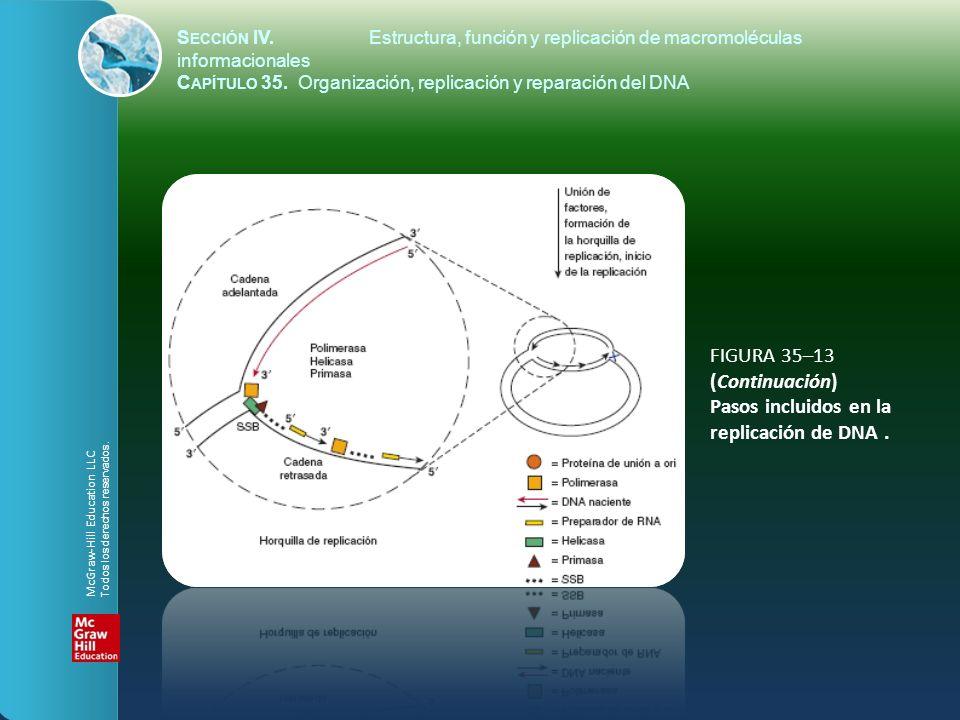 FIGURA 35–13 (Continuación) Pasos incluidos en la replicación de DNA. S ECCIÓN IV.Estructura, función y replicación de macromoléculas informacionales
