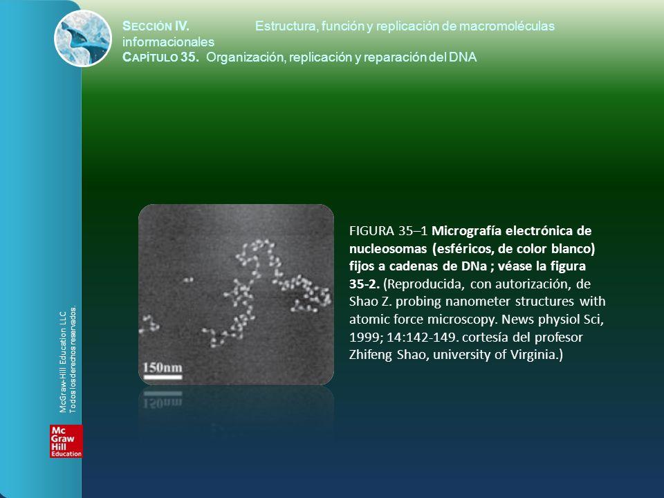 S ECCIÓN IV.Estructura, función y replicación de macromoléculas informacionales C APÍTULO 35. Organización, replicación y reparación del DNA FIGURA 35