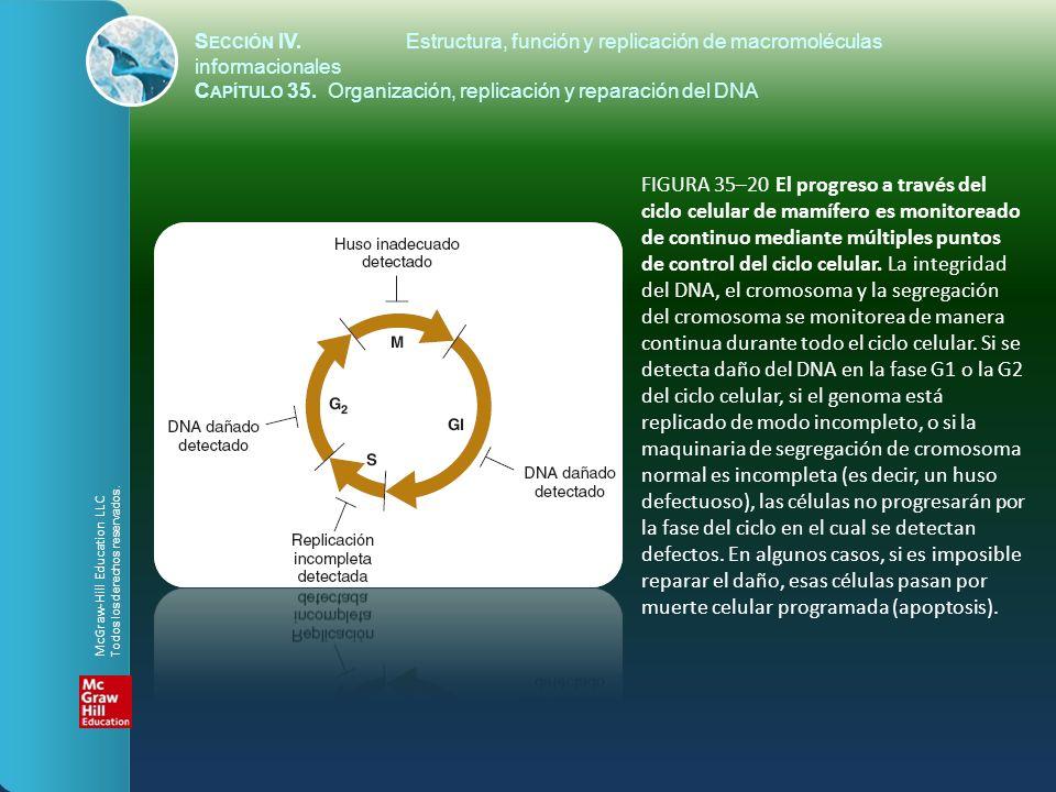 FIGURA 35–20 El progreso a través del ciclo celular de mamífero es monitoreado de continuo mediante múltiples puntos de control del ciclo celular. La