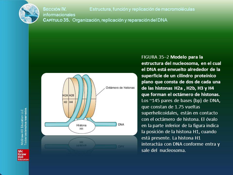 FIGURA 35–2 Modelo para la estructura del nucleosoma, en el cual el DNA está envuelto alrededor de la superficie de un cilindro proteínico plano que c