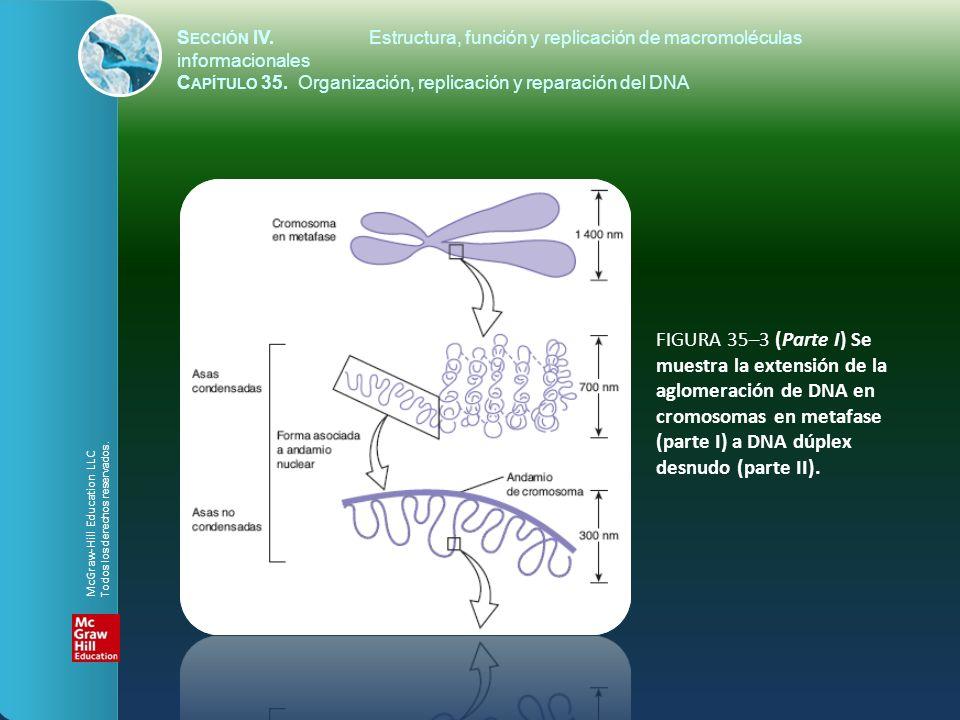 FIGURA 35–3 (Parte I) Se muestra la extensión de la aglomeración de DNA en cromosomas en metafase (parte I) a DNA dúplex desnudo (parte II). S ECCIÓN
