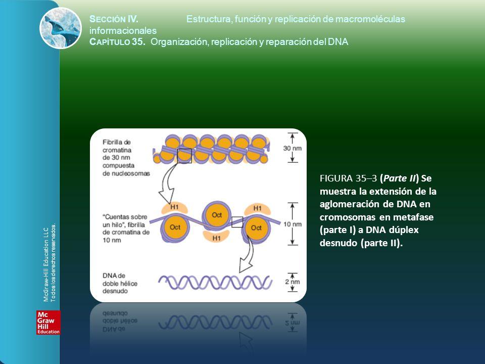 FIGURA 35–3 (Parte II) Se muestra la extensión de la aglomeración de DNA en cromosomas en metafase (parte I) a DNA dúplex desnudo (parte II). S ECCIÓN
