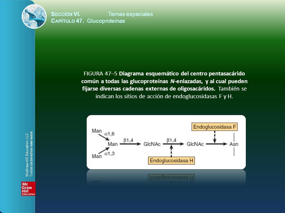 S ECCIÓN VI.Temas especiales C APÍTULO 47.Glucoproteínas FIGURA 47–6 La estructura del dolicol.