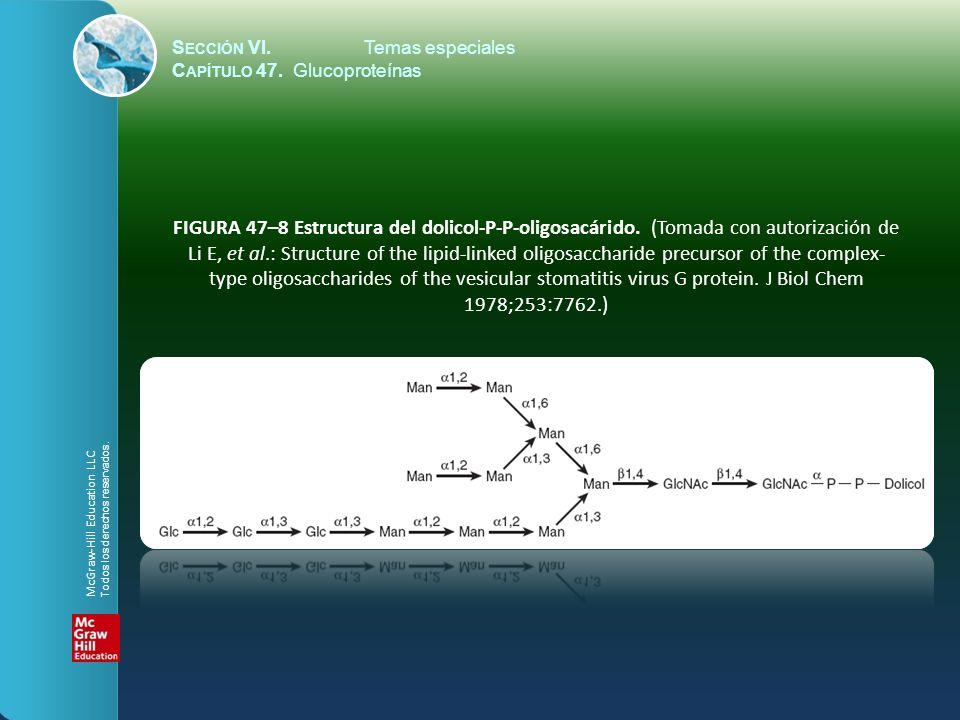 FIGURA 47–9 Vía esquemática del procesamiento de oligosacárido.
